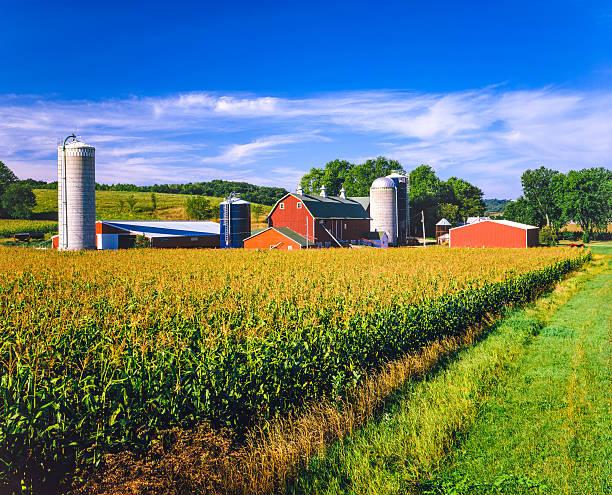 Corn Crop And Iowa Farm At Harvest Time Wall Art