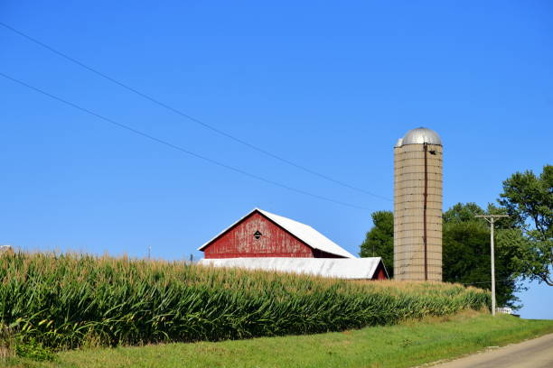 Corn Crop, Barn and Country Road