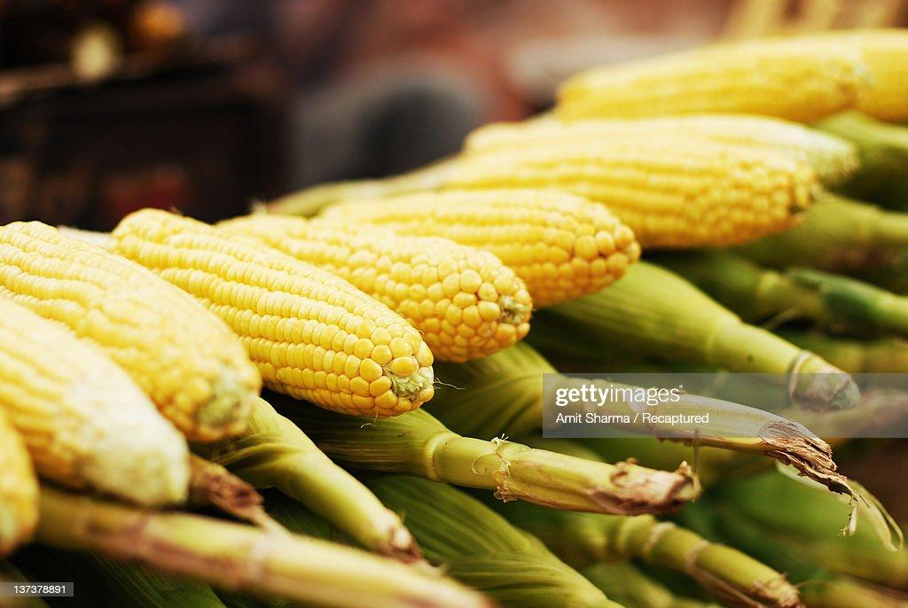 Corn ears : Stock Photo