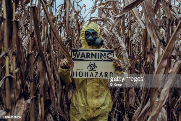 corn field devastated by drought - biochemical weapon stock pictures, royalty-free photos & images