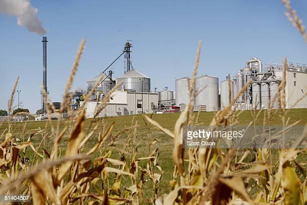 Corn grows near Adkins Energy October 4 2004 near Lena Illinois Adkins Energy uses corn to produce 40 million gallons of ethanol a year as well as...