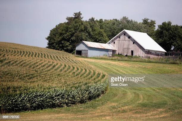 Corn grows on a farm on July 13 2018 near Amana Iowa Farmers in Iowa and the rest of the country who are already faced with decadelow profits are...