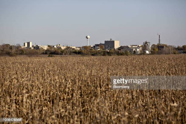 Corn grows on the grounds of the 3M Co Cottage Grove Center in Cottage Grove Minnesota US on Friday Oct 19 2018 3M's Cottage Grove factory had been...