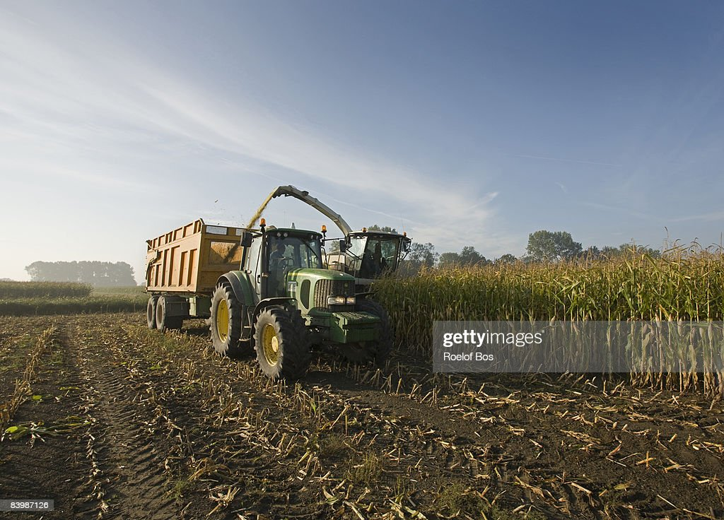 corn harvest with tractor, trailer and combine  : Stock Photo