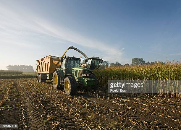 corn harvest with tractor, trailer and combine  - corn stock pictures, royalty-free photos & images