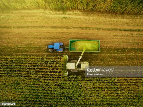corn harvesting with agriculture vehicles - cultivated land stock pictures, royalty-free photos & images