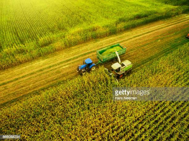 Corn harvesting with agriculture vehicles