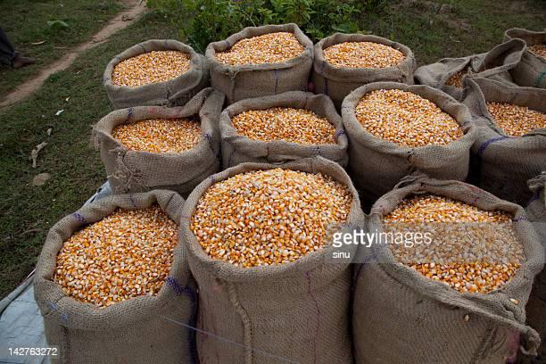 Corn in sacks