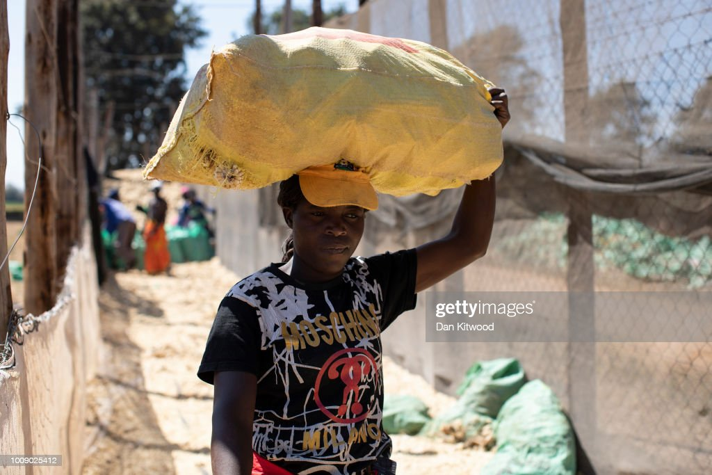 Farming In Zimbabwe : News Photo