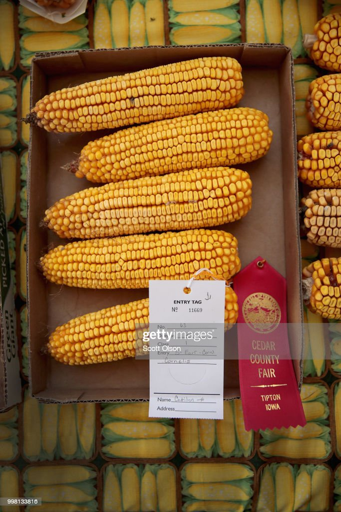 Corn is displayed for judging at the Cedar County Fair on July 13, 2018 in Tipton, Iowa. The fair, like many in counties throughout the Midwest, helps to nurture a new generation of farmers by teaching the fundamentals of quality livestock care and breeding. Farmers in Iowa and the rest of the country, who are already faced with decade-low profits, are bracing for the impact a trade war with China may have on their bottom line going forward.