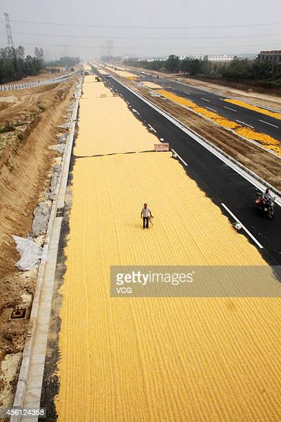 Corn is dried in the sun by villagers on the surface of a road on September 26 2014 in Zhengzhou Henan province of China