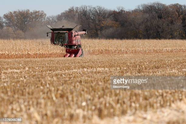 Corn is harvested at a farm near Carman Manitoba Canada on Saturday Oct 10 2020 Costs of staples slumped at the start of the global outbreak reaching...