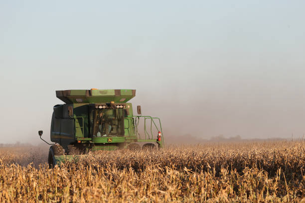 CAN: A Corn Harvest As Production Increases