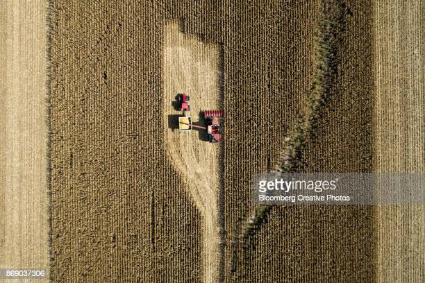 Corn is harvested with a combine harvester