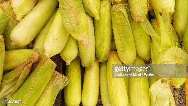corn on display at market - shaifulzamri stock pictures, royalty-free photos & images