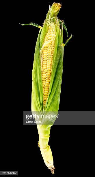 Corn on the cob on Black
