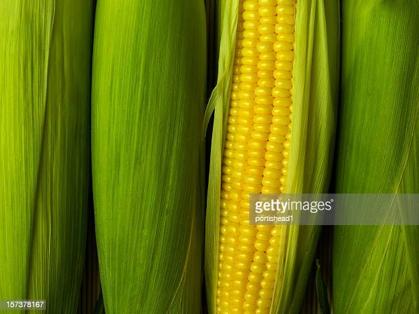 a corn peeled revealing its yellow cob - corn stock pictures, royalty-free photos & images