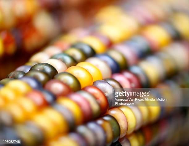 corn - vanessa van ryzin foto e immagini stock