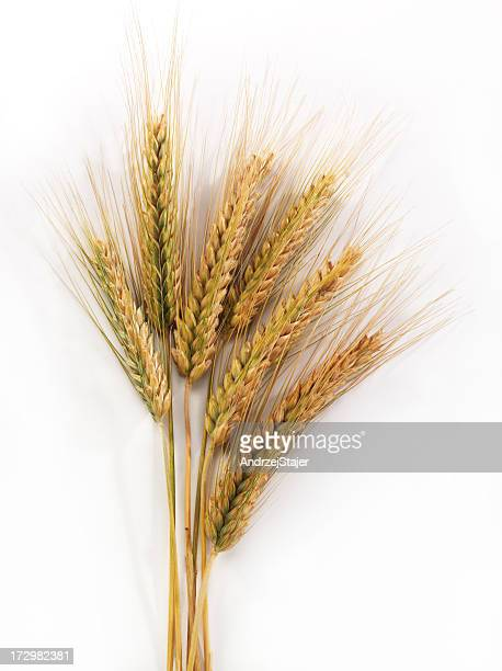 corn - rye grain stock pictures, royalty-free photos & images