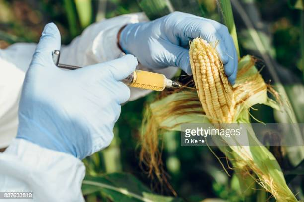 corn - microbiologist stock pictures, royalty-free photos & images