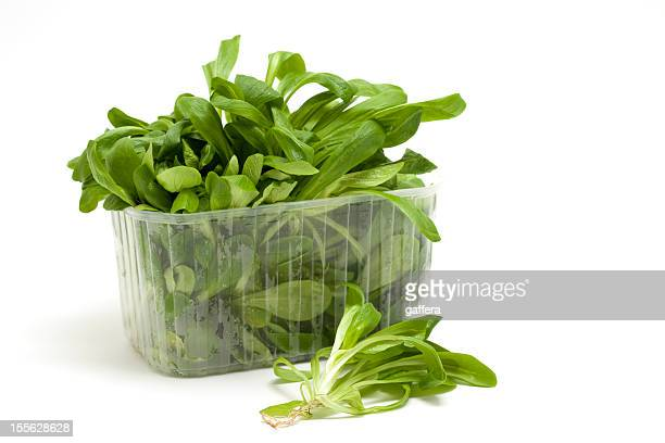 Feldsalat in Kunststoff-Sortiment