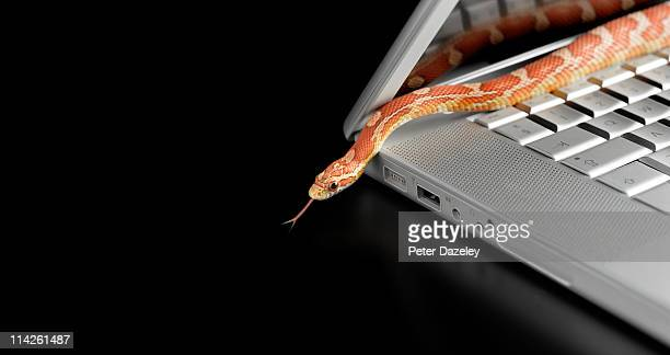 corn snake coming out of laptop computer - computer bug stock photos and pictures