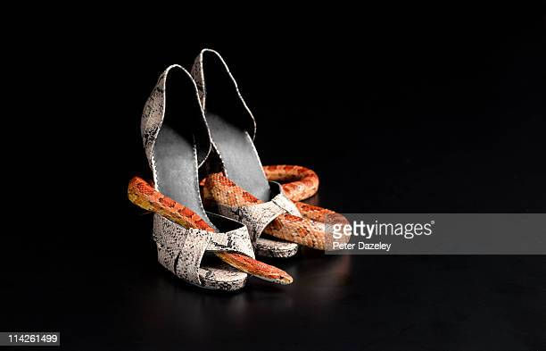 corn snake wrapped around snake skin shoes - corn snake stock pictures, royalty-free photos & images