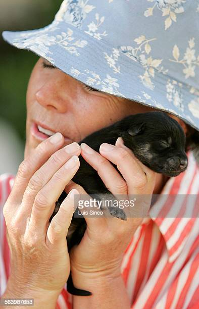 Cornelia Fahy of Greenwich Conn gets to know a potcake puppy while on vacation on the Caribbean island of Providenciales A program called Potcake...