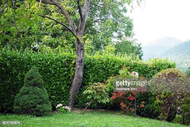 Corner of Italian garden, Bergamo.