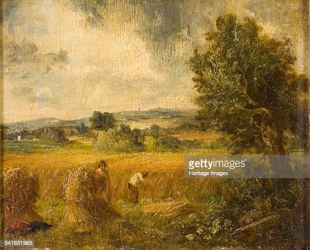 Cornfield', 1796-1837. Artist: John Constable.