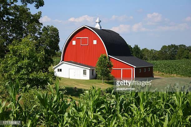Cornfield and Barn