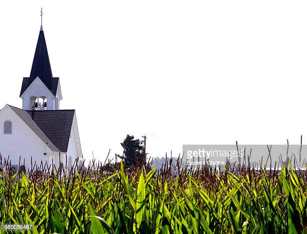 cornfield and church in rural washington state - 尖り屋根 ストックフォトと画像