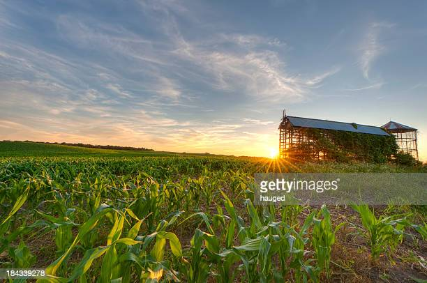 cornfield and grain bin at sunset - minnesota bildbanksfoton och bilder