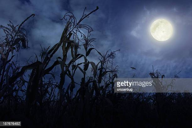 Cornfield at Night