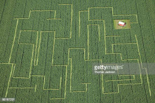Cornfield maze to red barn