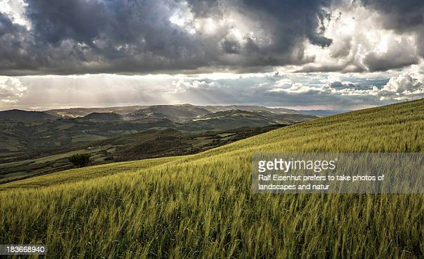 cornfield , val d`orca, tuscany - natur stock pictures, royalty-free photos & images