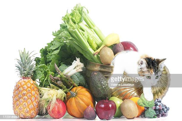cornucopia fruits vegetables and cat - pumpkin cats stock pictures, royalty-free photos & images