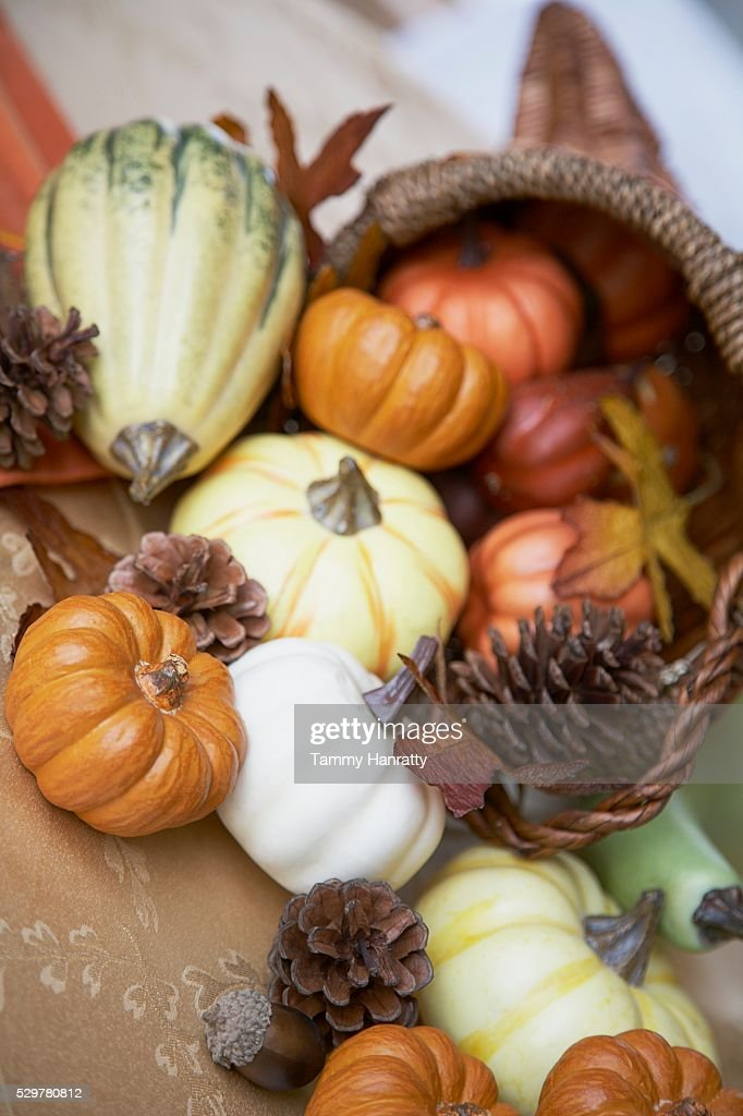 Cornucopia Full of Gourds : Stock Photo