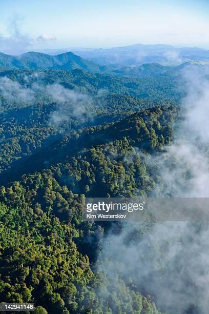 Coromandel Forest Park, aerial, morning
