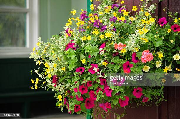 coronation park, jersey. - hanging basket stock pictures, royalty-free photos & images