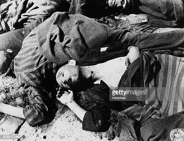 Corpses lie on the ground at Ohrdruf Concentration Camp They are dressed in striped uniforms | Location Ohrdruf Europe