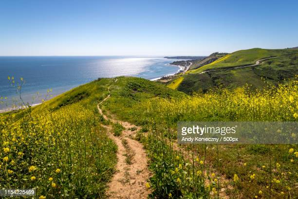 corral canyon super bloom - malibu beach stock pictures, royalty-free photos & images