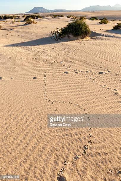 Corralejo sand dunes, Fuerteventura, Canary Isles