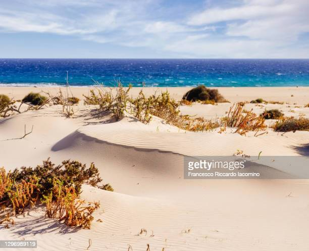 corralejo sand dunes near the atlantic ocean in fuerteventura, canary islands. - francesco riccardo iacomino spain foto e immagini stock