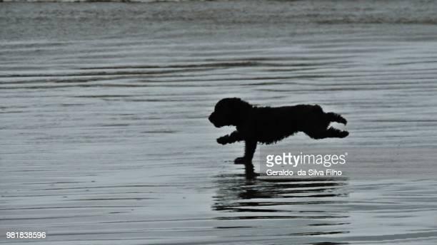correndo na beira da praia - correndo stock photos and pictures
