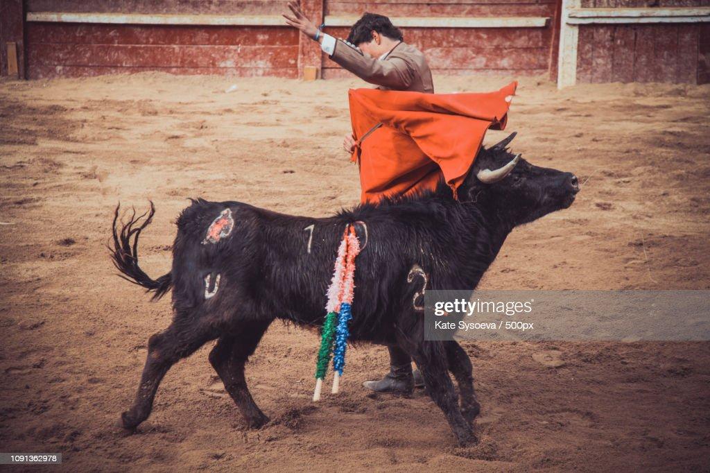 Corrida Image corrida in ciudad rodrigo stock photo | getty images