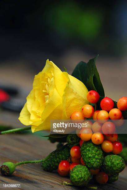 corsage with yellow rosa and berry - bittersweet berry stock photos and pictures