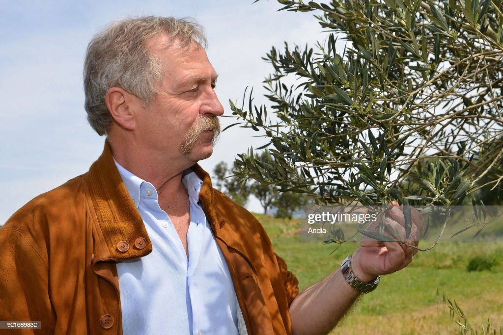 Patrimonio. . Jose Bove, member of the European Parliament, came to this small village of wine-growers and olive-growers near Bastia, to make people aware of the potential damages resulting of the Xylella Fastidiosa, a bacterium transmitted by insects and coming from Latin America that destroyed 10% of the olive trees in Apulia, a region of Italy. Here in front of a young olive tree.