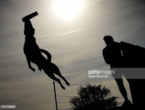 Cortney Adams watches as her dog 'Whiskey' leaps into the water to record the distance of his jump during the Dock Dogs West Coast Challenge in...
