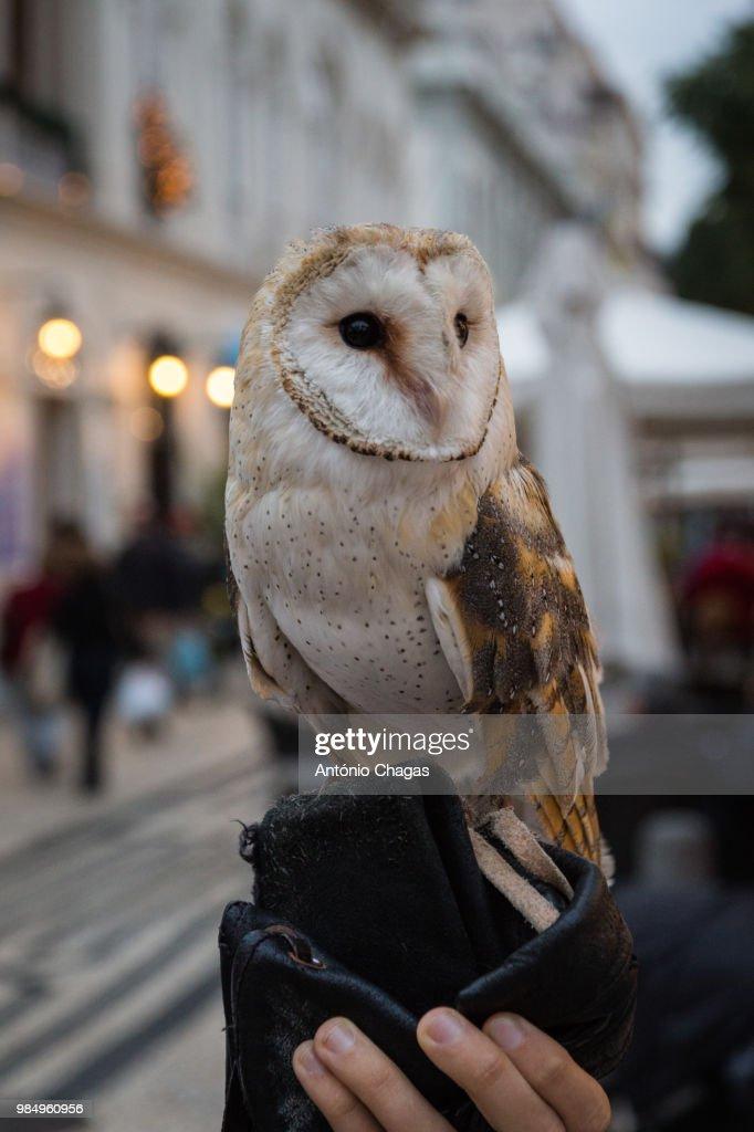 Coruja Stock Foto Getty Images